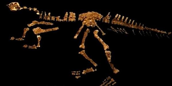 পরিচয় মিলেছে মাংসাশী ডাইনোসরের