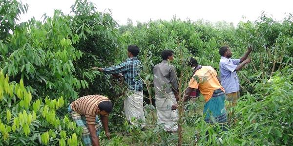 panchagarh-tespata-pic-08