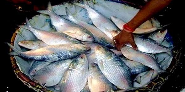 দেশের প্রথম বিশেষায়িত মাছ বাজার যাত্রাবাড়িতে