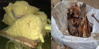 ঠাকুরগাঁওয়ের বাস কাউন্টারে বস্তা ভর্তি  মানুষের খুলি ও হাড় উদ্ধার