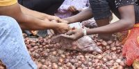 রাজধানীতে ৪৫ টাকায় মিলবে পেঁয়াজ